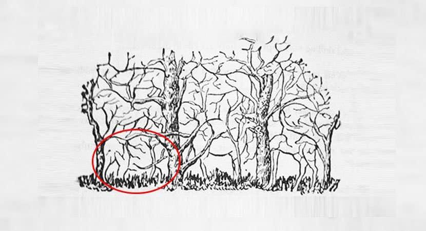 5Qual animal você vê na imagem