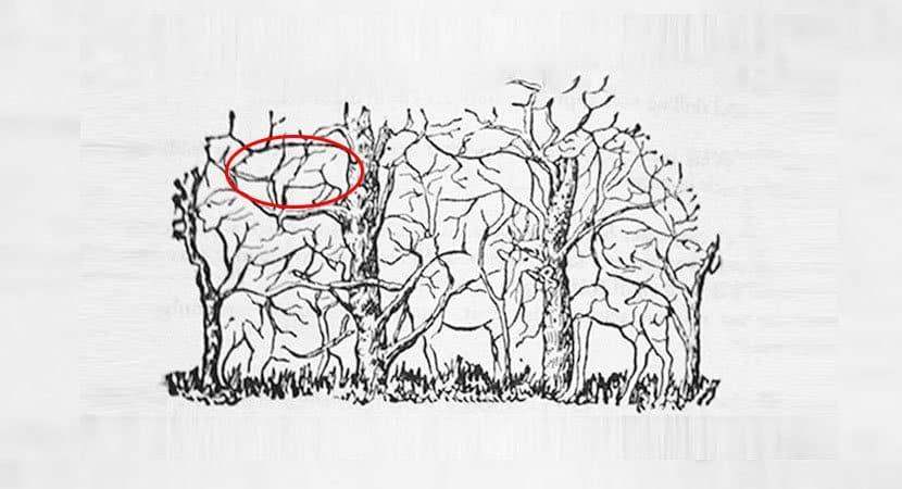 6Qual animal você vê na imagem