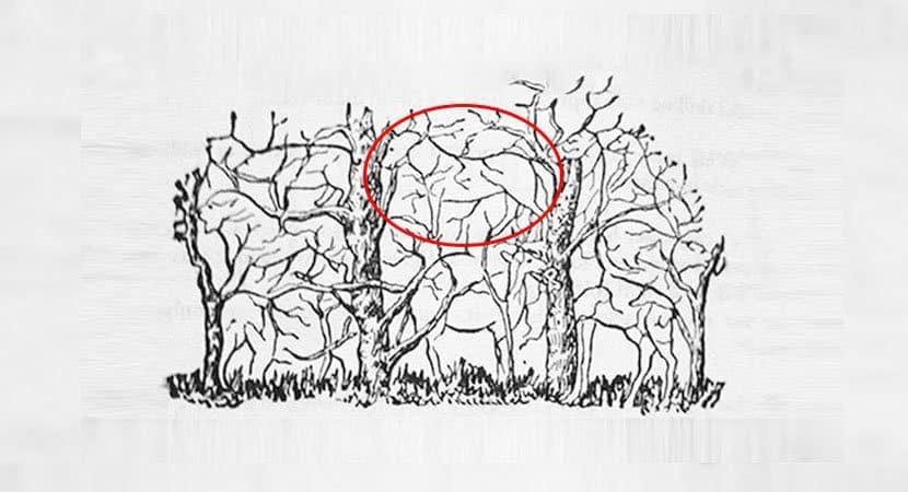 7Qual animal você vê na imagem
