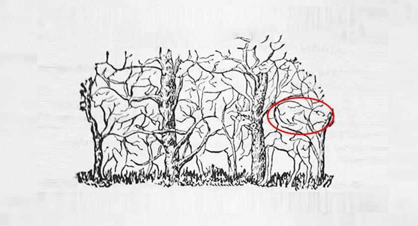 8Qual animal você vê na imagem