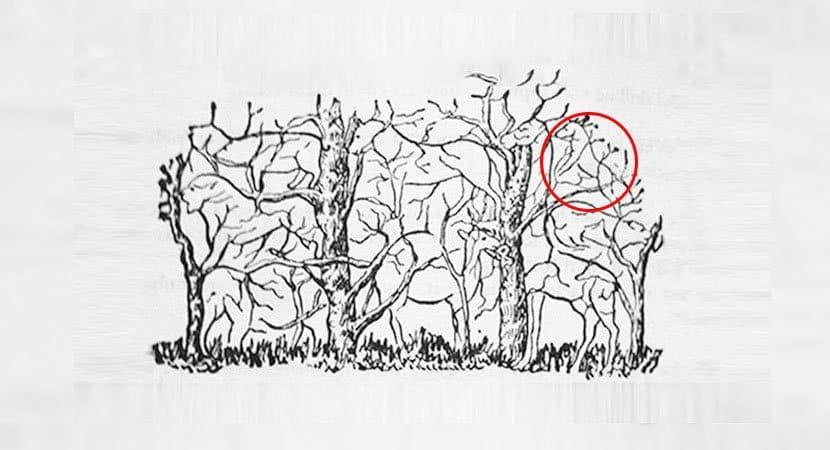 9Qual animal você vê na imagem